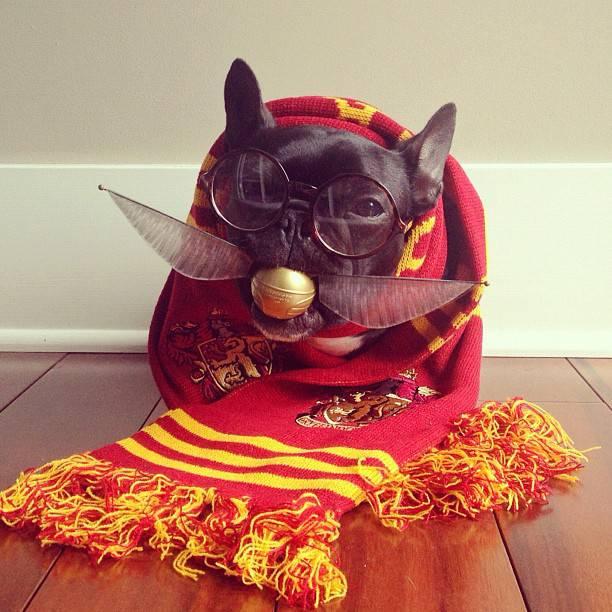 Cane Harry Potter5
