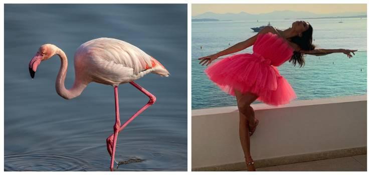 flamingo pose star in posa come fenicotteri