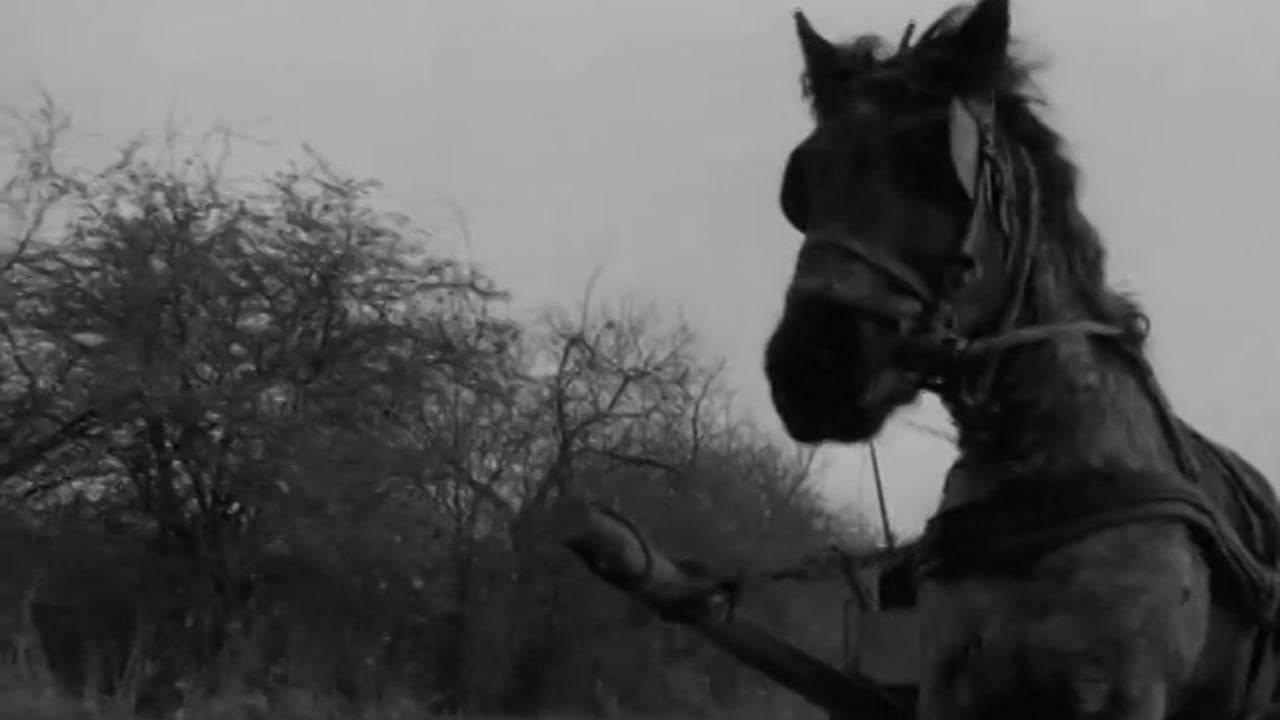 I film da vedere in tempo di quarantena: Il cavallo di Torino