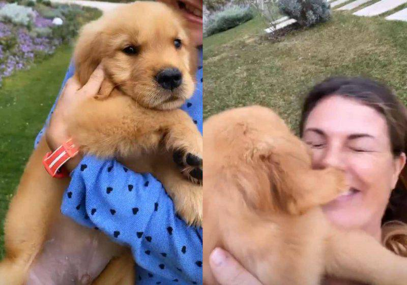 Cani Vanessa Incontrada