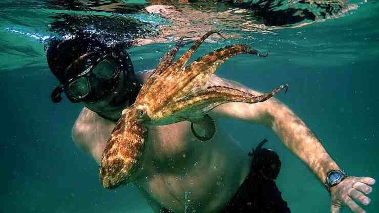Il mio amico in fondo al mare (Netflix)